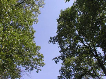 Space in the canopy allowing sunlight through.