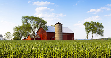 Field and barn with silo