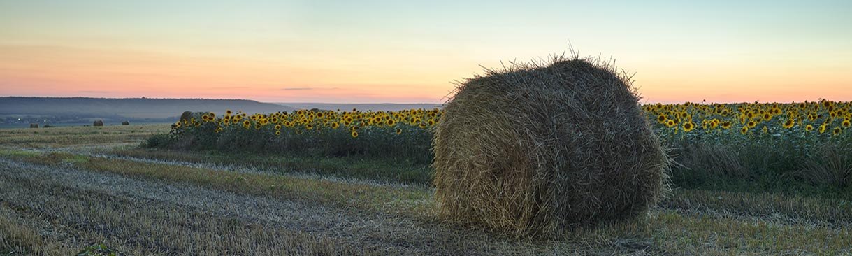 large wheat roll with field of sunflowers at sunset