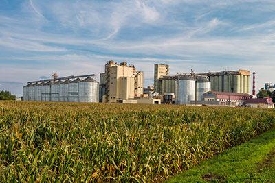 An agro processing plant and silos fronted by a cornfield