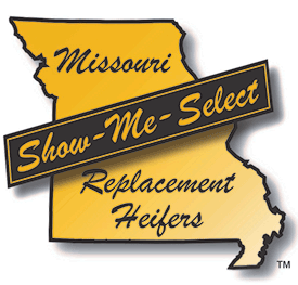 Missouri Show-Me-Select Replacement Heifers