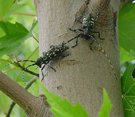 insects on tree