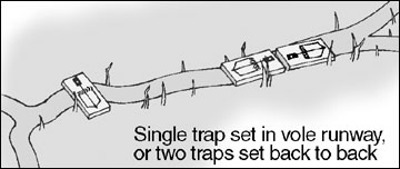 Place traps end to end