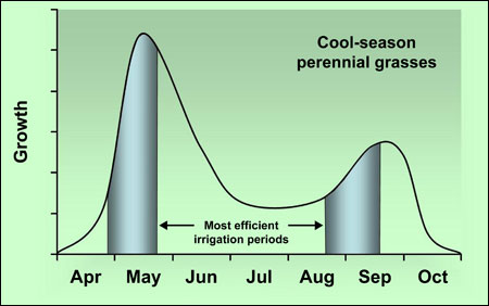 Typical growth patterns of cool-season perennial grasses