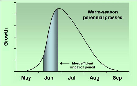 Typical growth patterns of warm-season perennial grasses