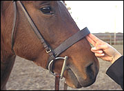 Adjust the noseband.