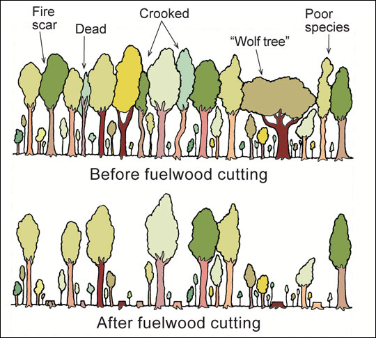 Before and after fuel wood cutting