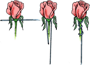 Cross wire flowers with a hard base, such as roses.