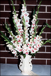 Gladioli come in a wide array of colors