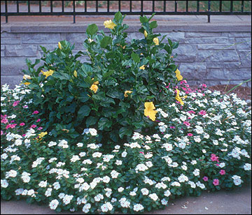 Annuals in a bed
