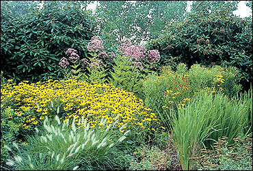 Ornamental grasses and native wildflowers