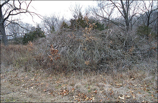 Hinge-cut trees and other types of downed-tree structures created near field edges provide escape cover for wildlife