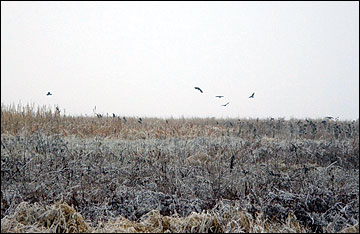 To retain important wildlife habitat and cover through the winter, delay harvest of switchgrass until the next spring