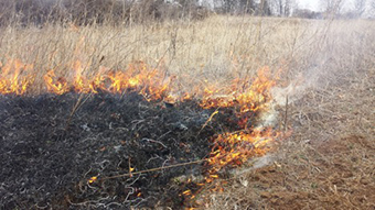 A prescribed burn in an open field of tall grasses.