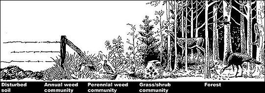 Bobwhites require the proper mix of early plant successional habitats, made up of weeds, grasses and shrubs.