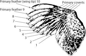 Wing nomenclature