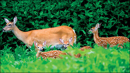 Attract deer to your property