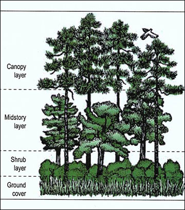 Birds typically use a specific layer in the tree canopy for foraging and nesting