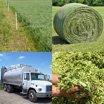 Understand the cost implications of each feed source. Grass, hay, silage and concentrate feed all vary in their cost per pound of dry matter.