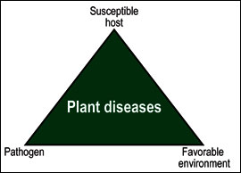 Plant disease occurrence triangle