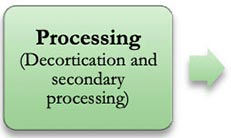 Processing (decortication and secondary processing)
