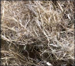 A closeup of a pile of bast.