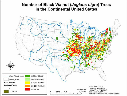 Map of walnut trees